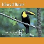 Echoes of Nature, Rainforest